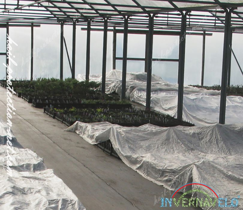 Crops in greenhouse protected with Invernavelo